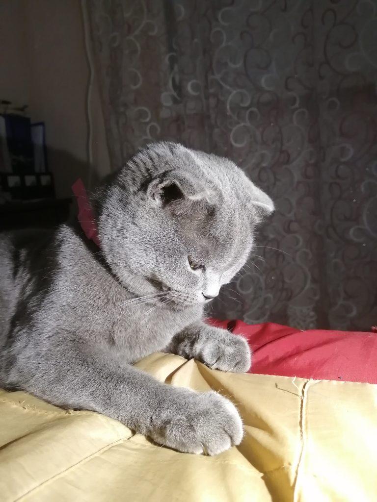 кошка снято на p30 lite